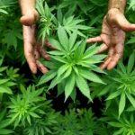 #Cannabislegale, un vademecum da distribuire ovunque.