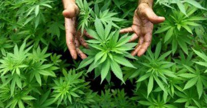 #Cannabislegale