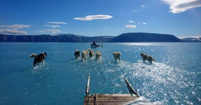 """Scioglimento record Groenlandia, è """"condanna a morte"""""""